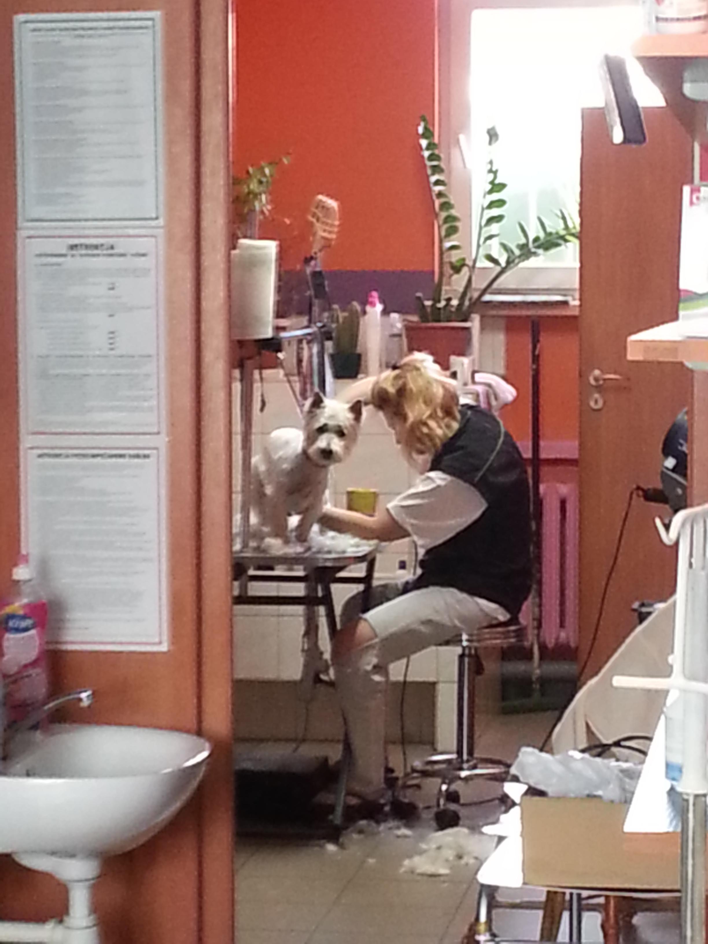 fifa fryzjer